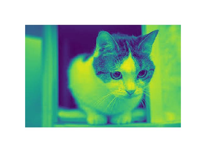 0120_cat_gray_wrong.png